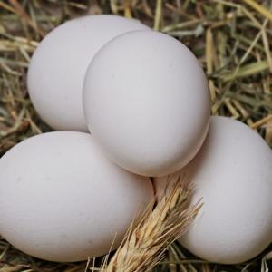 Hühner legen keine Eier - Was kann man tun?
