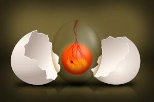 Huhn legt Ei ohne Schale