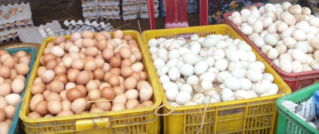Hühner legen viele Eier