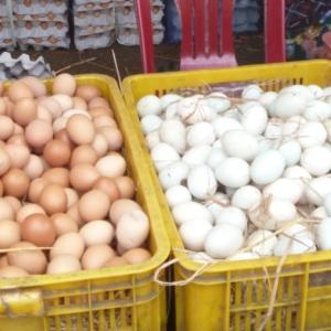Wie lange legen Hühner Eier?