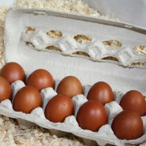 Warum legen Hühner Eier?