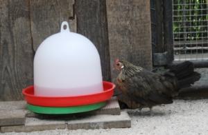 Futtersilo und Tränke für Hühner