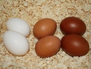 Braune Hühnereier