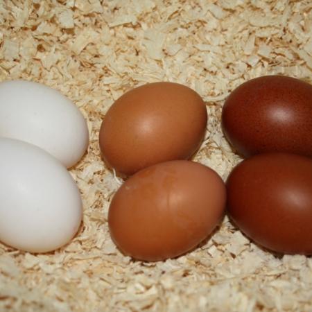 Dunkelbraune Hühnereier