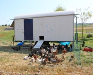 Bauwagen zum mobilen Hühnerstall umbauen