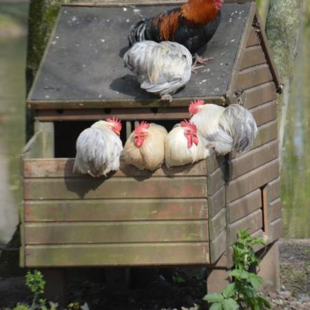 Hühnerstall kaufen