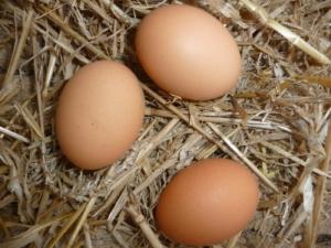 Legenest im Hühnerstall